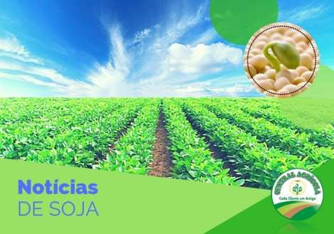 https://revistagloborural.globo.com/Noticias/Agricultura/Soja